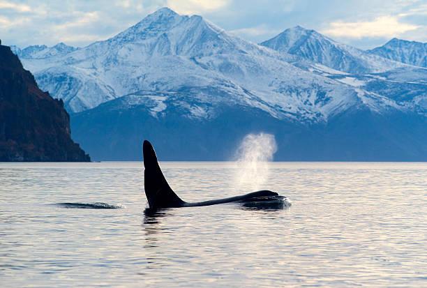 whale spout free.jpg