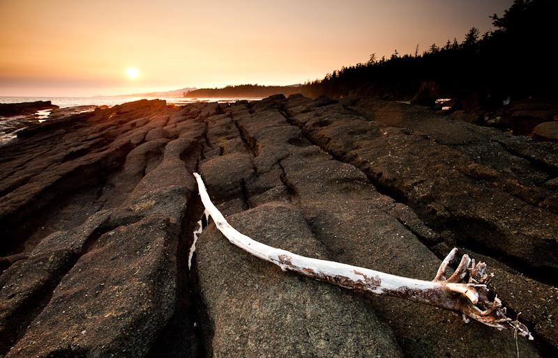 West Coast Trail sunset log