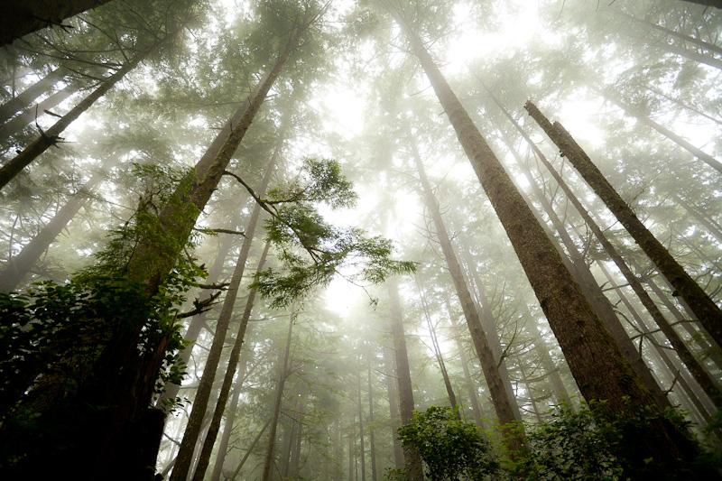 West Coast Trail Fog