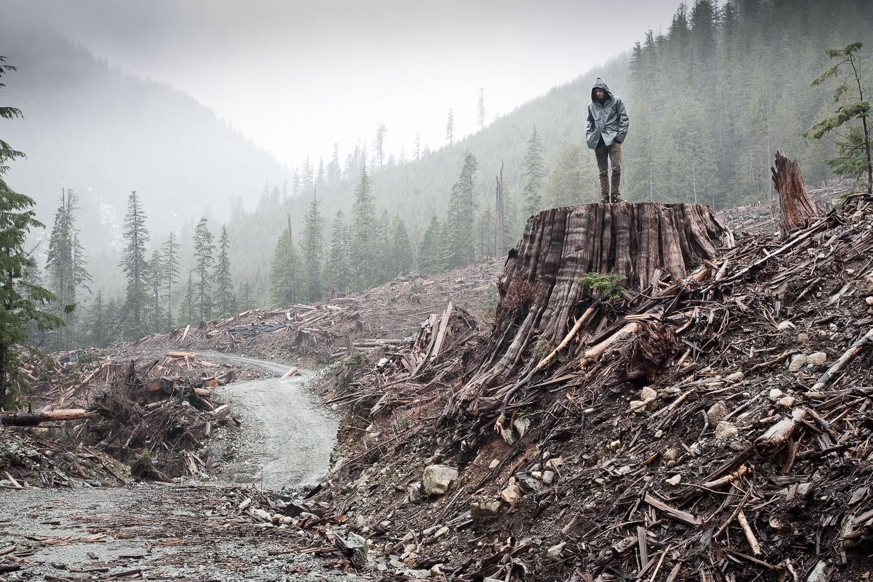 clearcut-logging-stump-vancouver-island-tj-watt.jpg