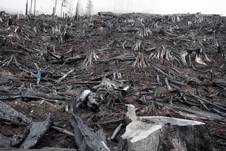 burnt-clearcut-stumps-logging-canada.jpg