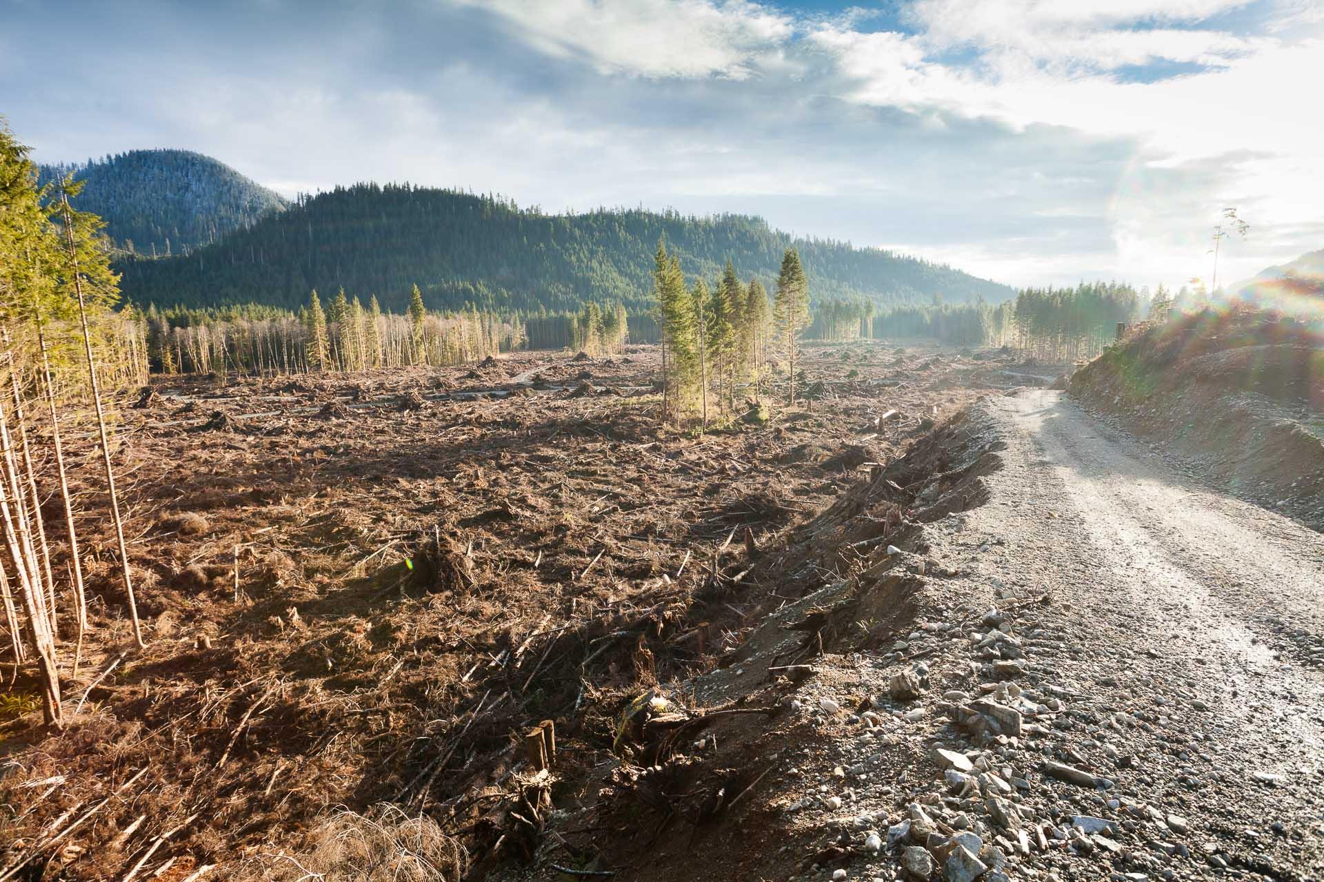 clearcut-logging-klanawa-valley-bc.jpg