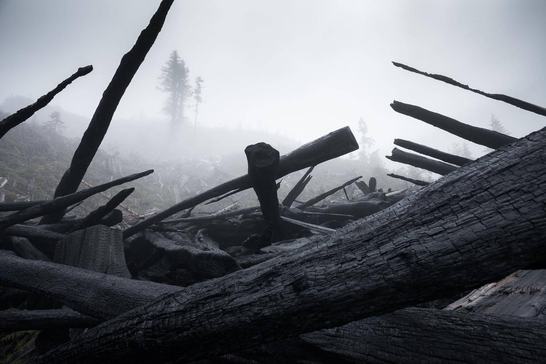 burnt-wood-klanawa-vancouver-island.jpg