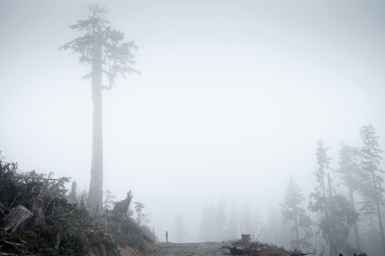 douglas-fir-clearcut-klanawa-valley.jpg