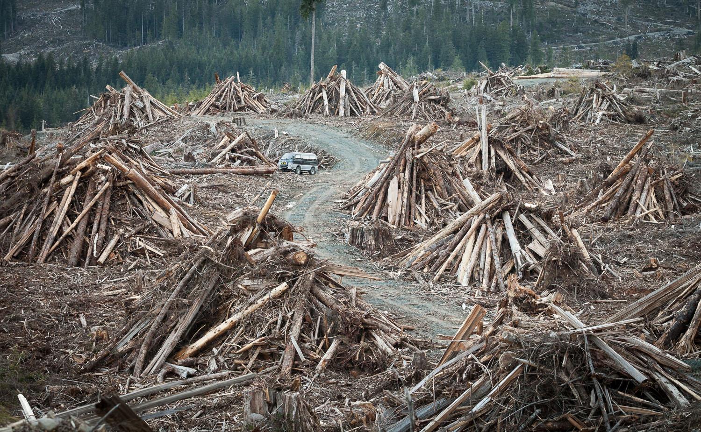 wood-waste-canada-tj-watt.jpg