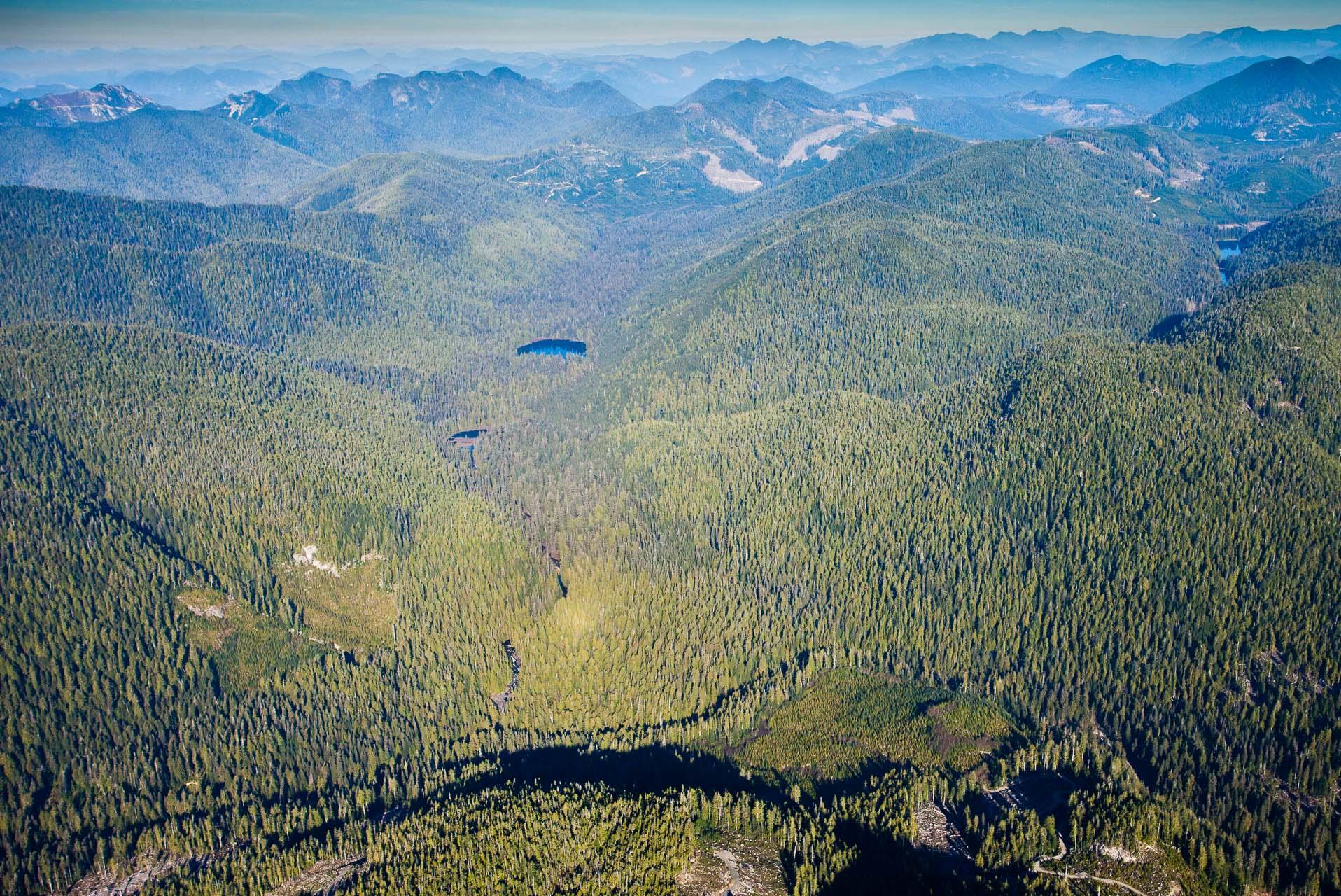 aerial-upper-walbran-valley-carmanah.jpg