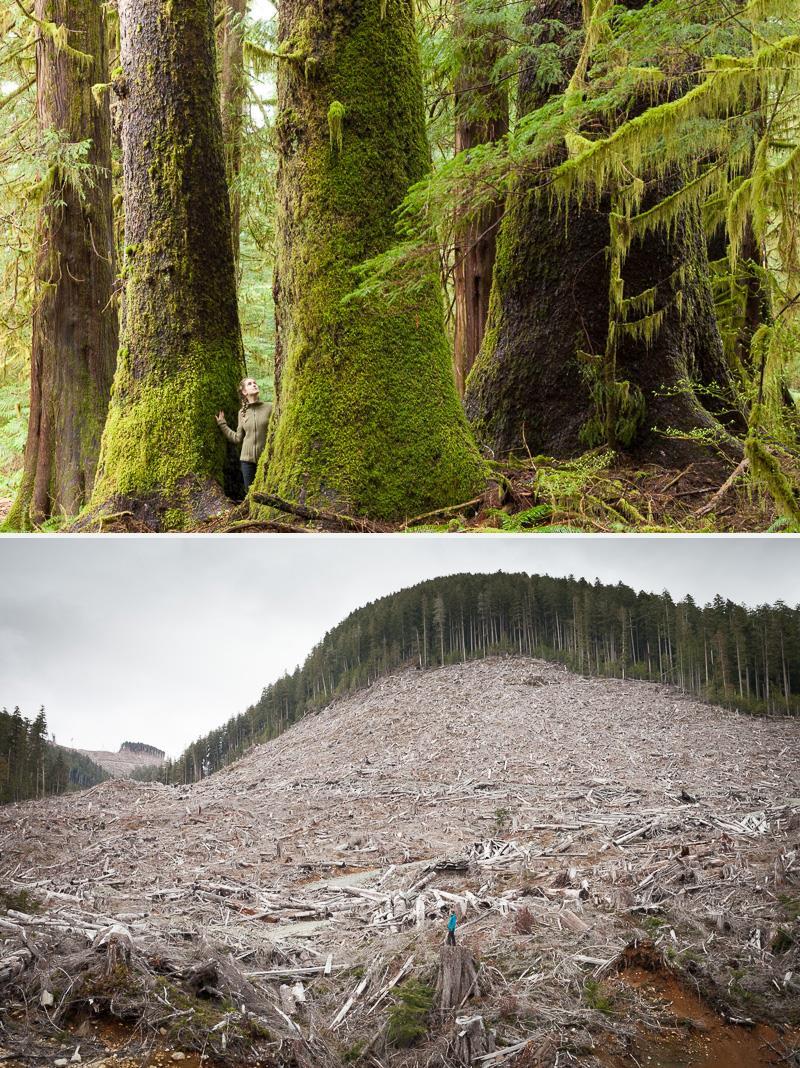 hadikin-walbran-logging-split.jpg