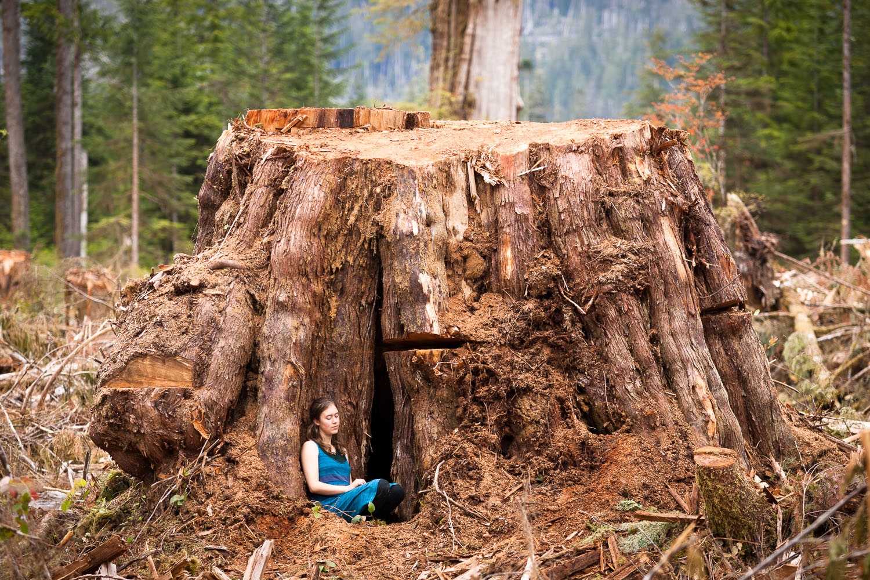 Giant western redcedar stump in the Klanawa Valley on southwestern Vancouver Island.