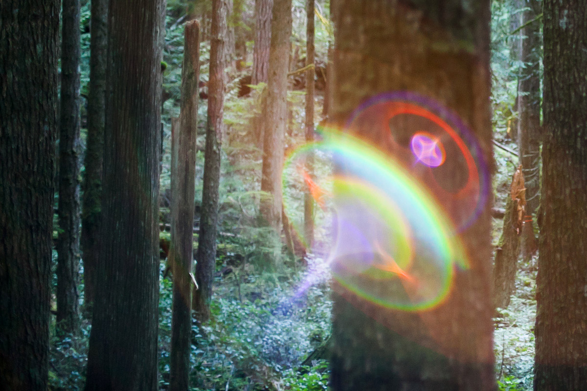 Lens flare in the forest with trees