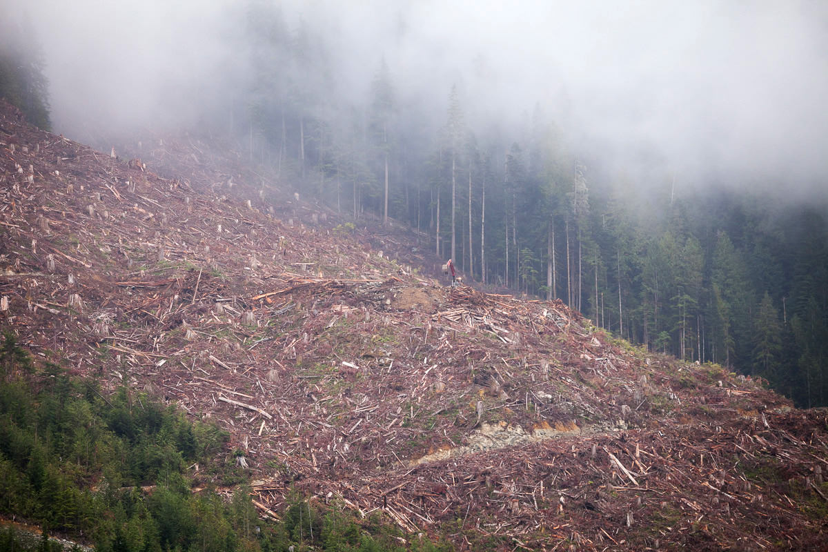 clearcut-logging-vancouver-island-1.jpg