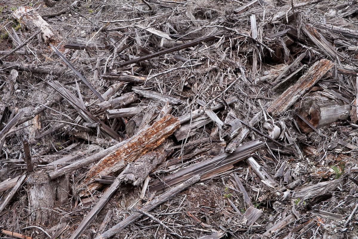 clearcut-logging-vancouver-island-4.jpg