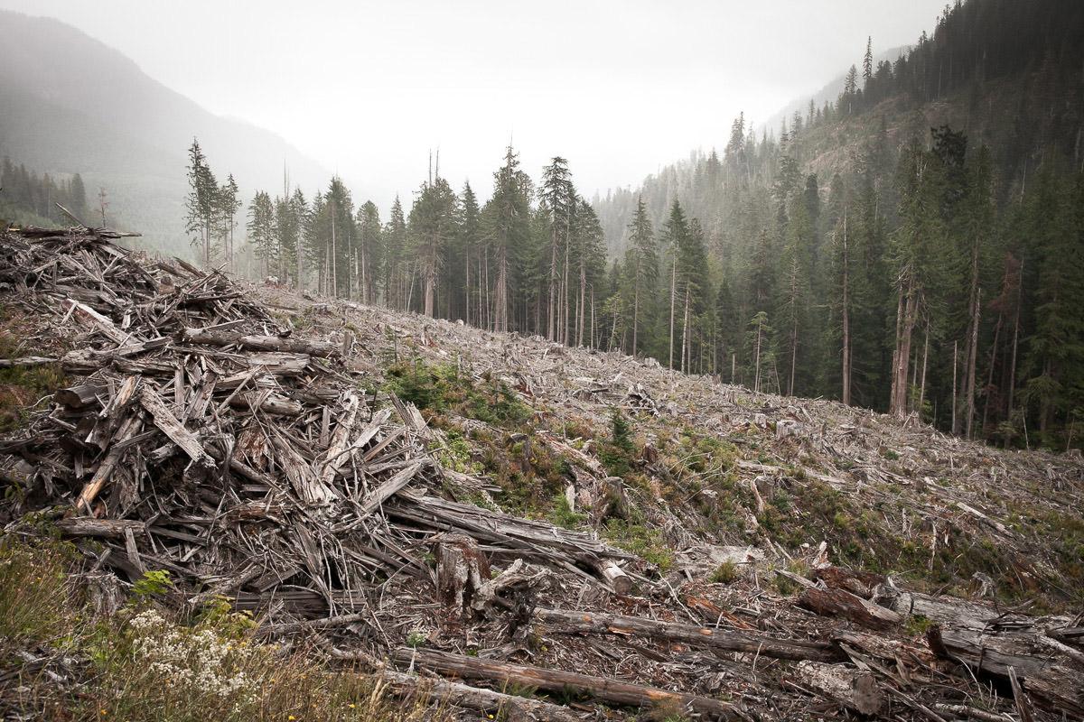 clearcut-logging-vancouver-island-6.jpg