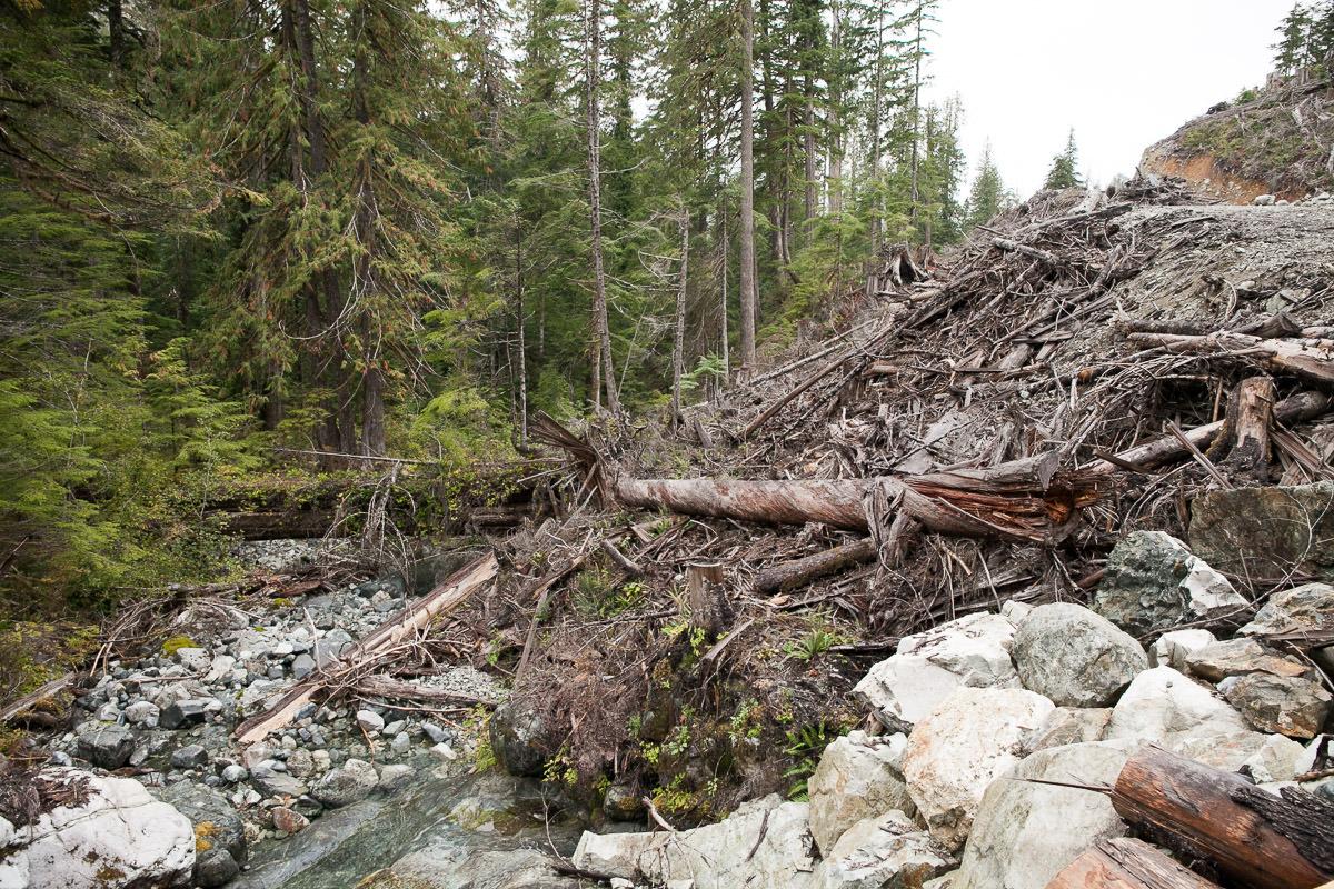 clearcut-logging-vancouver-island-5.jpg