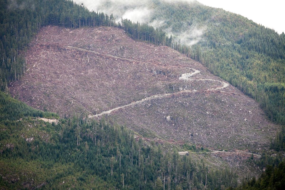 clearcut-logging-vancouver-island-7.jpg