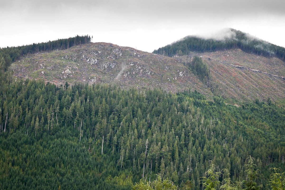 clearcut-logging-vancouver-island-10.jpg