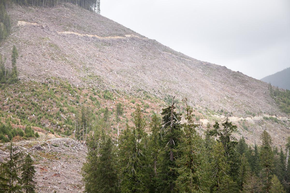clearcut-logging-vancouver-island-11.jpg
