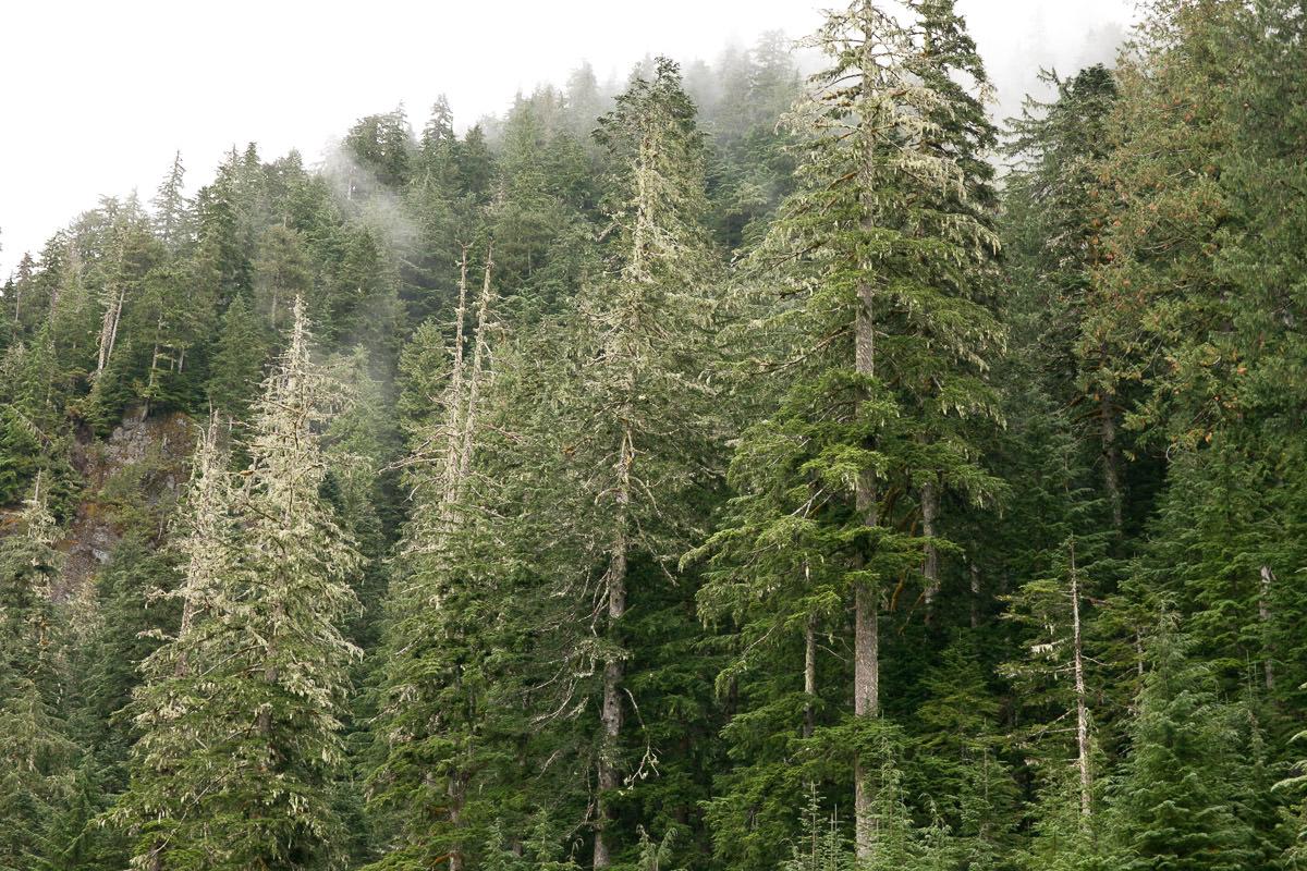 clearcut-logging-vancouver-island-9.jpg