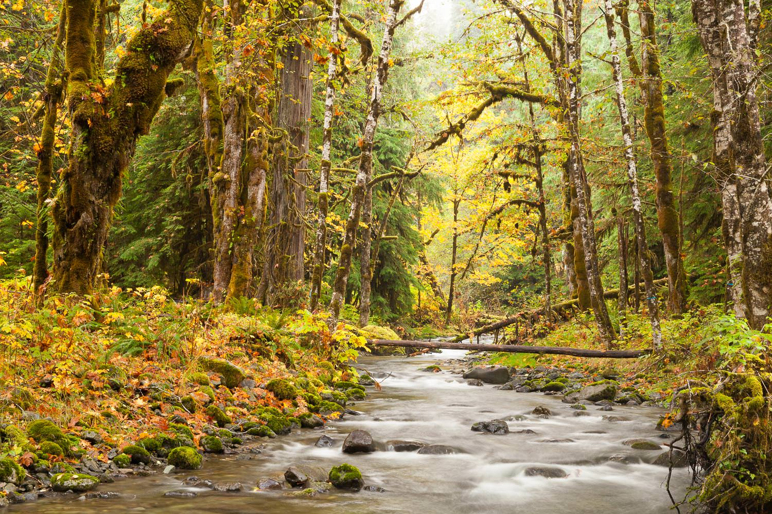 forest-creek-in-autumn-vancouver-island.jpg