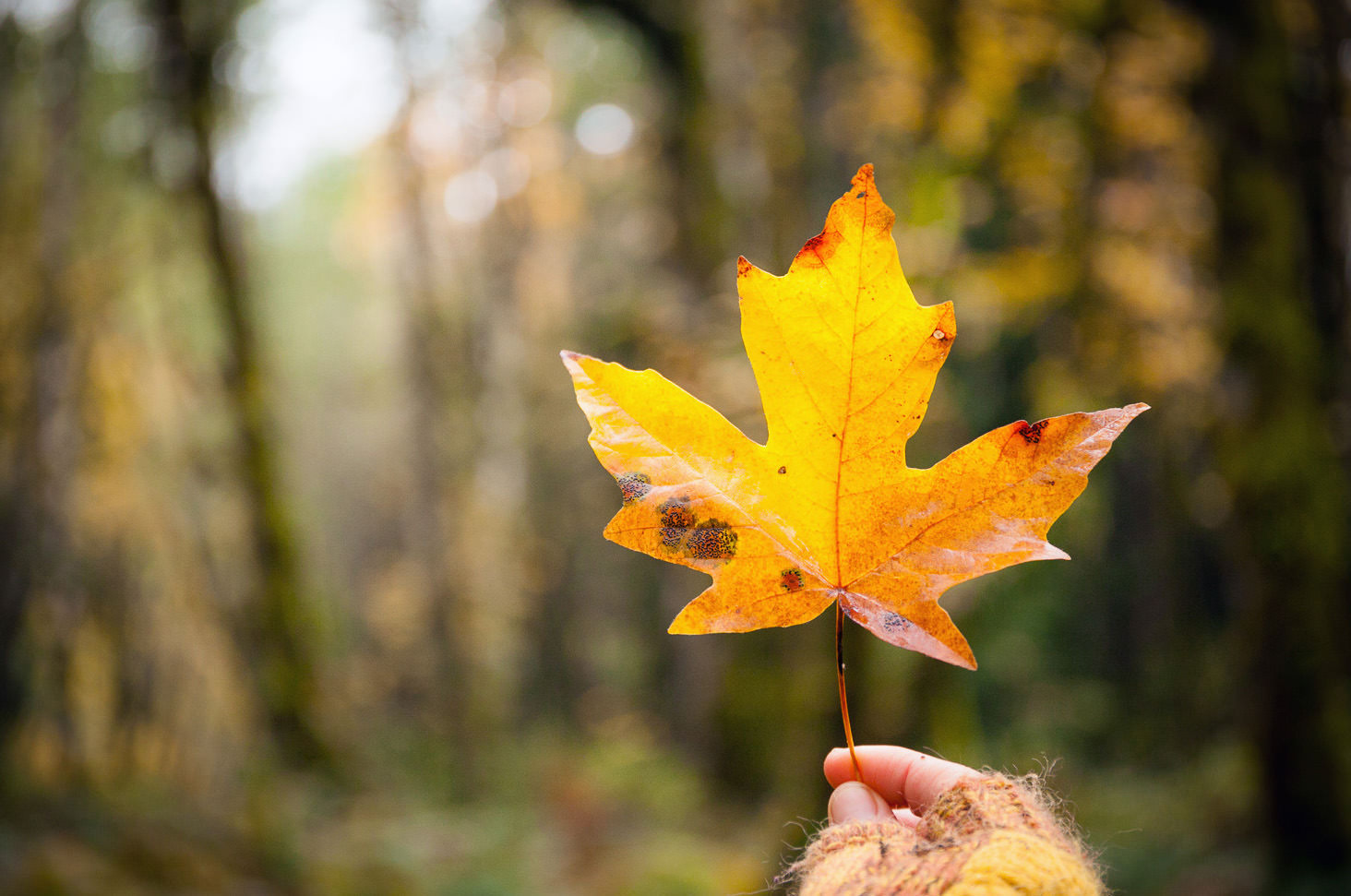 woman-holding-maple-leaf-fall.jpg