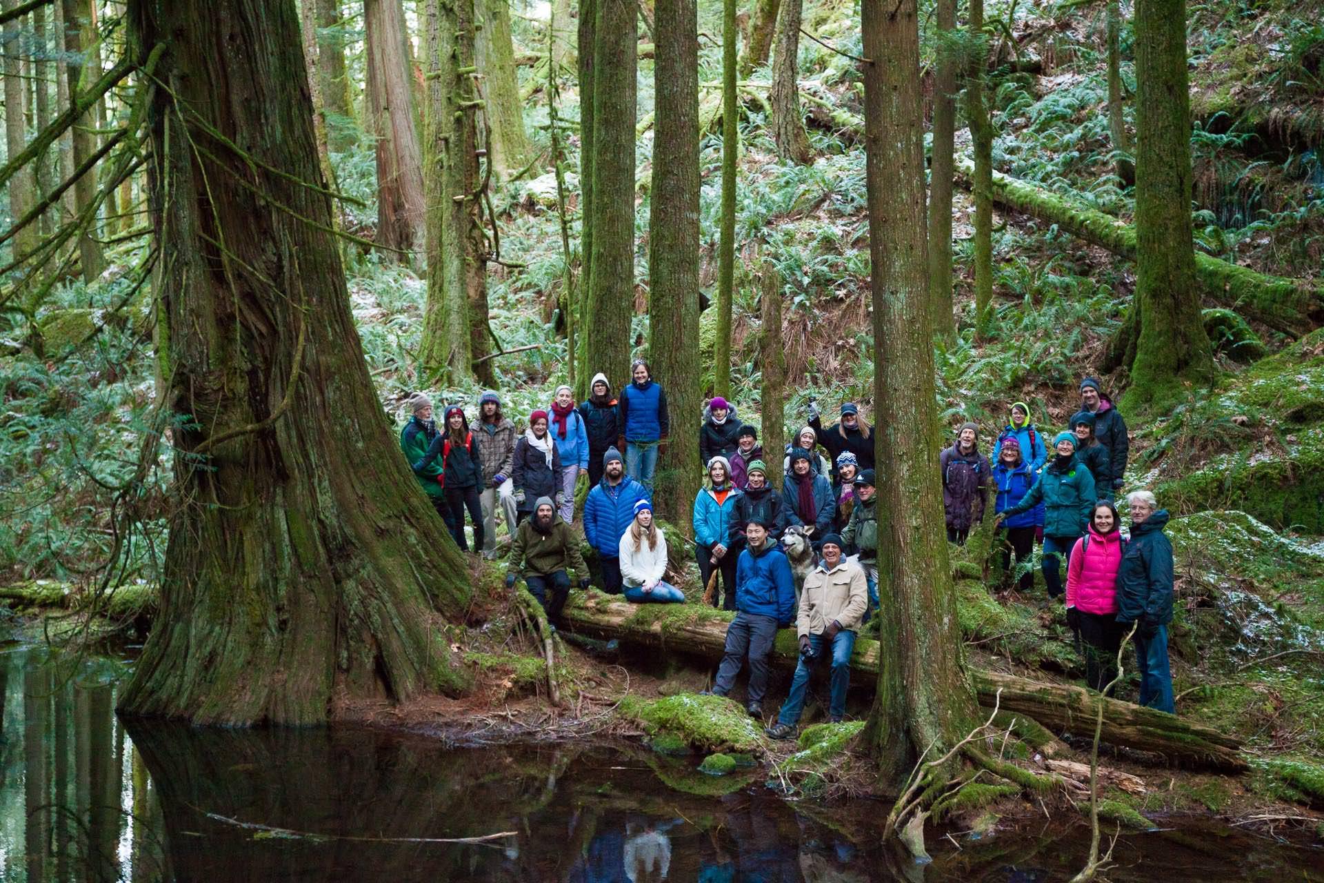 giant-cedar-group-echo-lake.jpg
