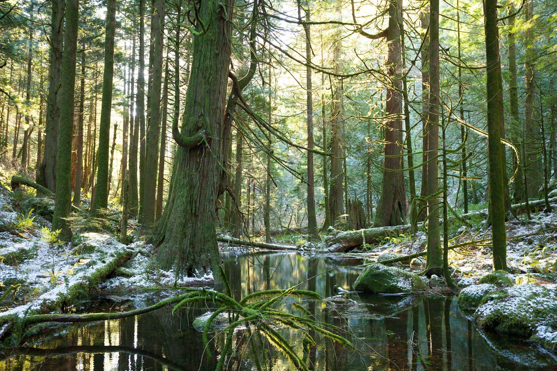 glowing-sunlight-in-winter-forest.jpg