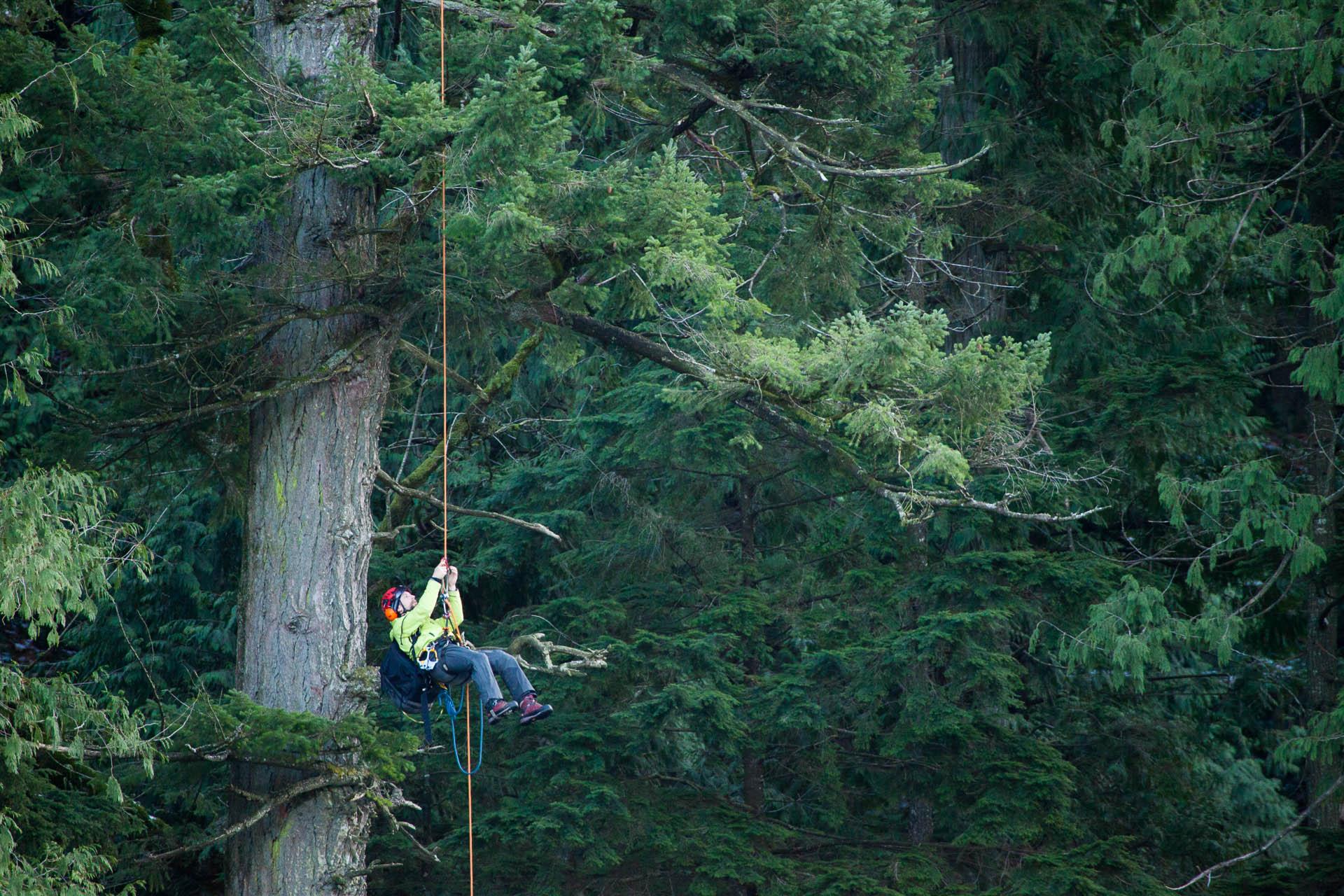 tree-climbing-at-echo-lake-3.jpg