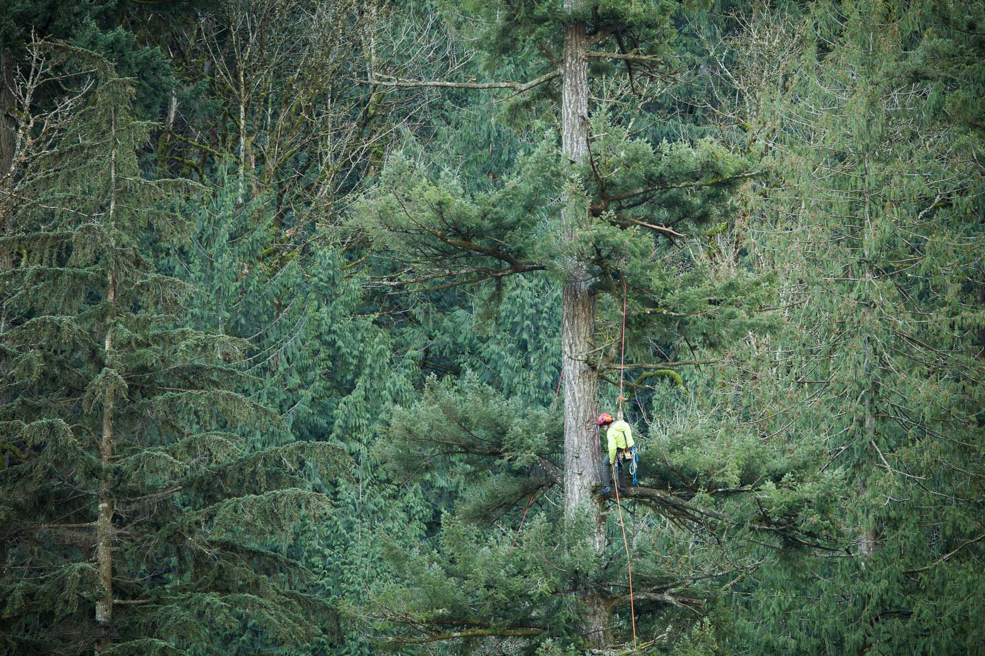 tree-climbing-at-echo-lake.jpg