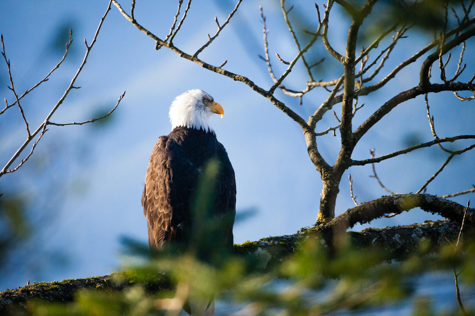 Eagle-Harrison-Mills-2014.jpg