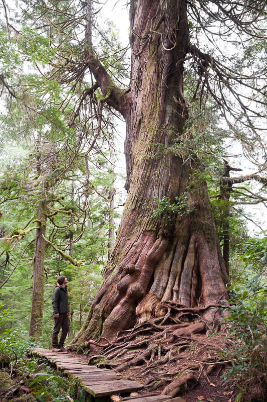 meares-island-big-tree-tj-watt.jpg
