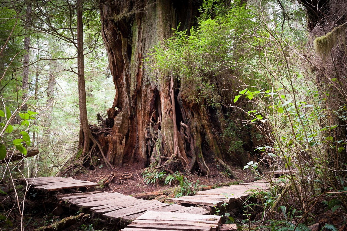 meares-hanging-garden-tree-boardwalk.jpg