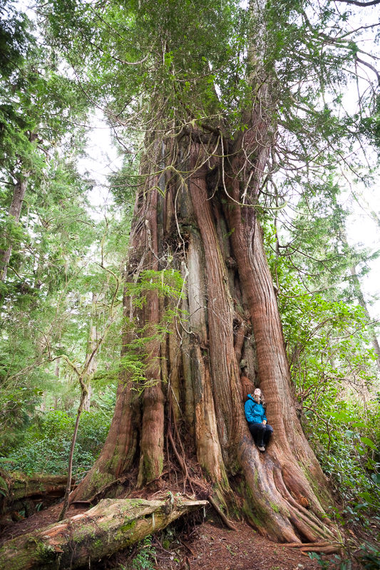 person-with-tree-meares-island.jpg