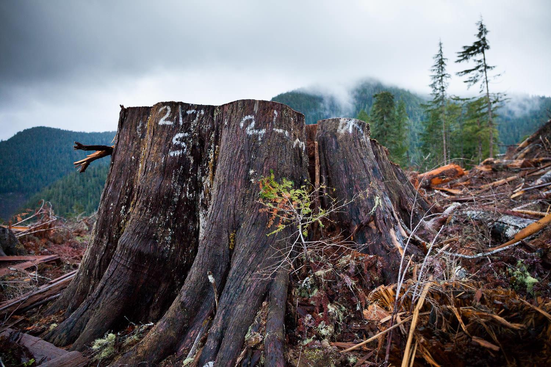 tj-watt-upper-walbran-logging-123.jpg