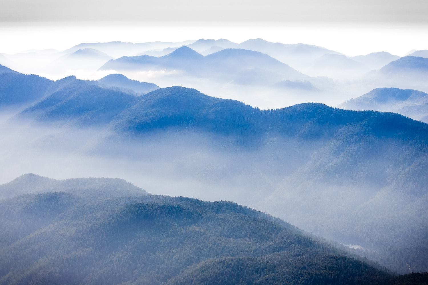 Mist & Mountains - Nitinat Triangle
