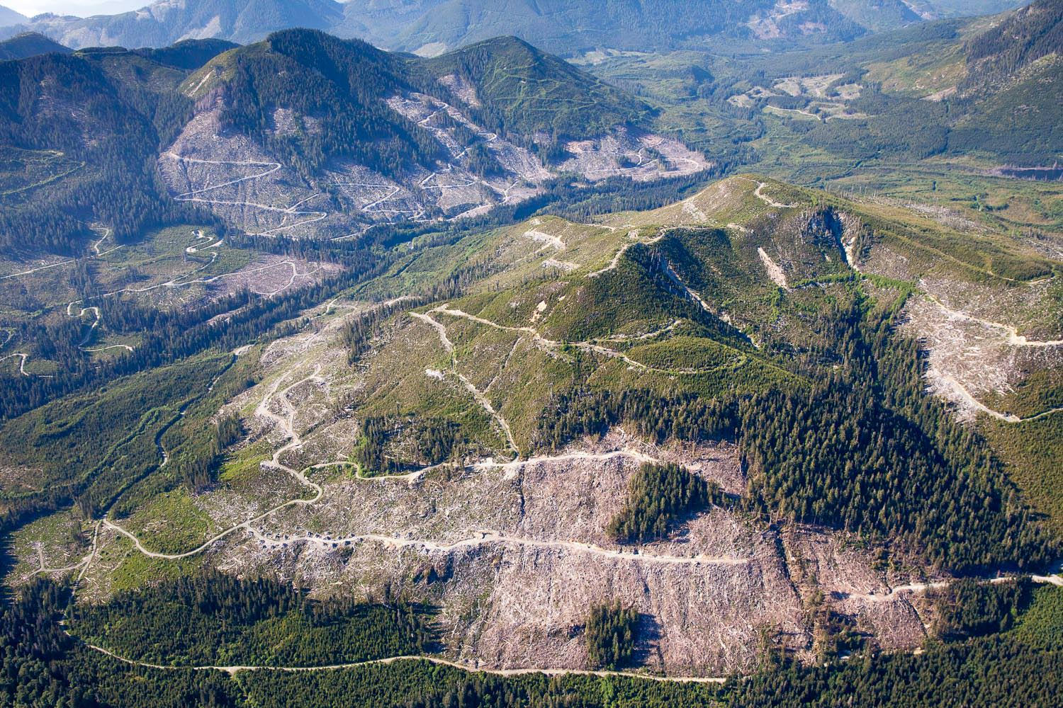 The impacts of industrial logging on the old-growth forests of the Klanawa Valley (located between Nitinat Lake and Bamfield) have been especially devestating. Western Forest Products, TFL 44.