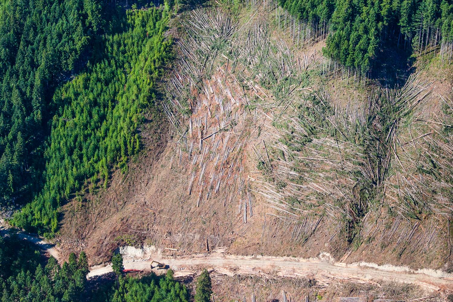 A clear example of what BC's endangered old-growth forests are being converted to: tree plantations that are typically cut again every 30-80 years and which lack the important ecological diversity of their predecessors. Lake Cowichan area.