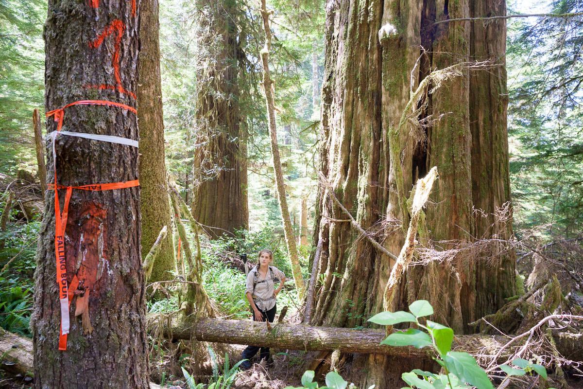 central-walbran-ancient-forest-61.jpg