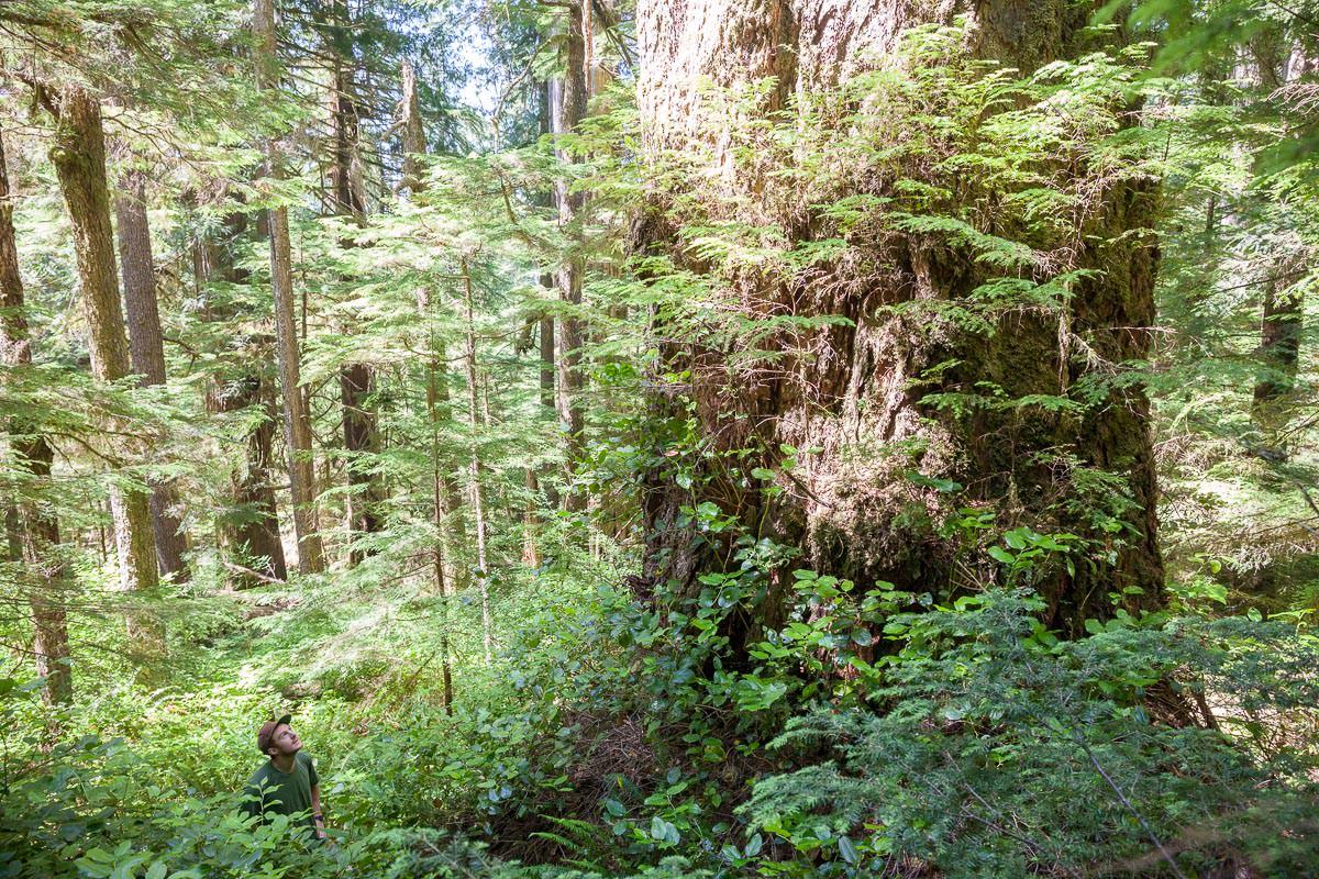 central-walbran-ancient-forest-83.jpg