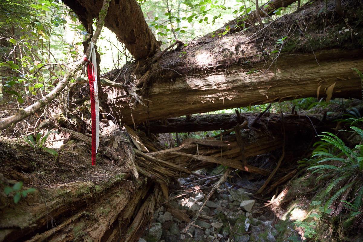 central-walbran-ancient-forest-43.jpg