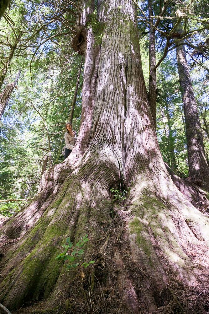 central-walbran-ancient-forest-124.jpg