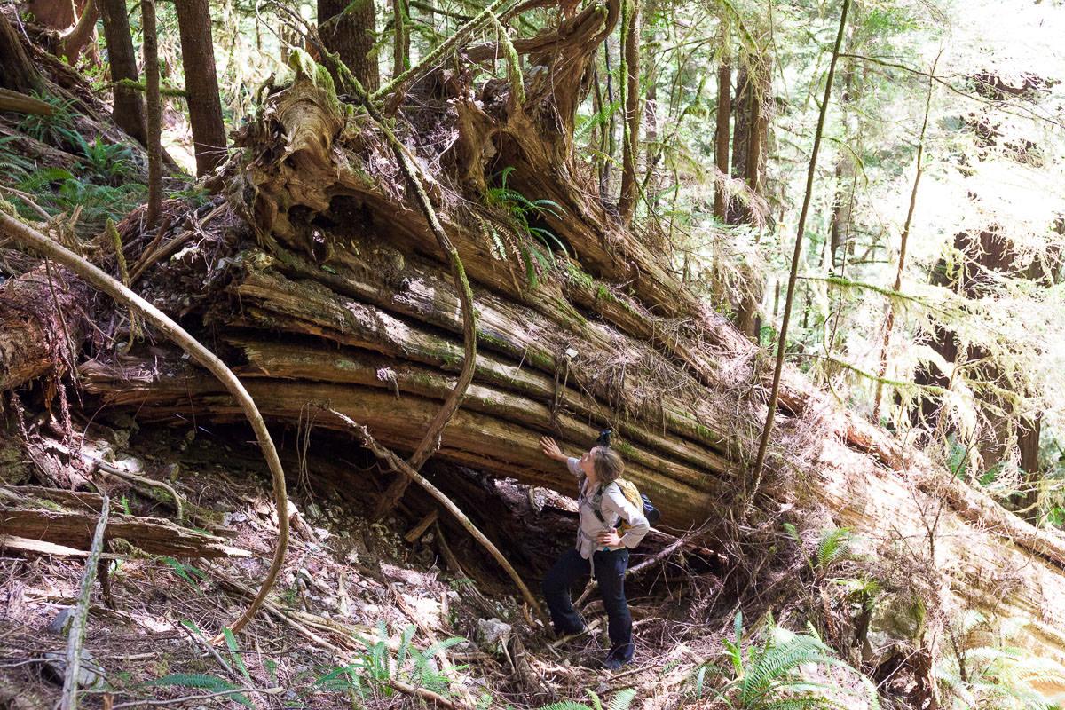 central-walbran-ancient-forest-190.jpg