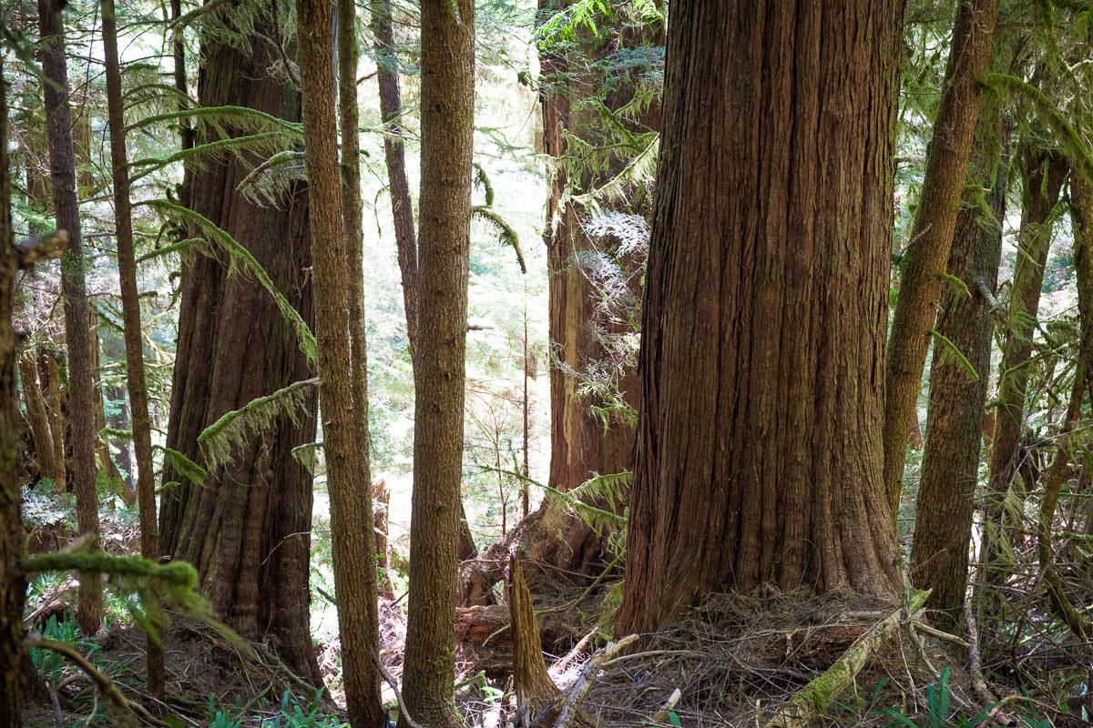 central-walbran-ancient-forest-192.jpg