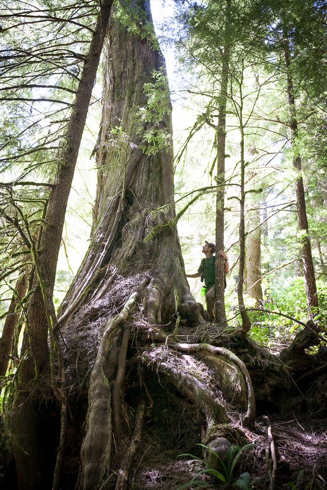 central-walbran-ancient-forest-229.jpg
