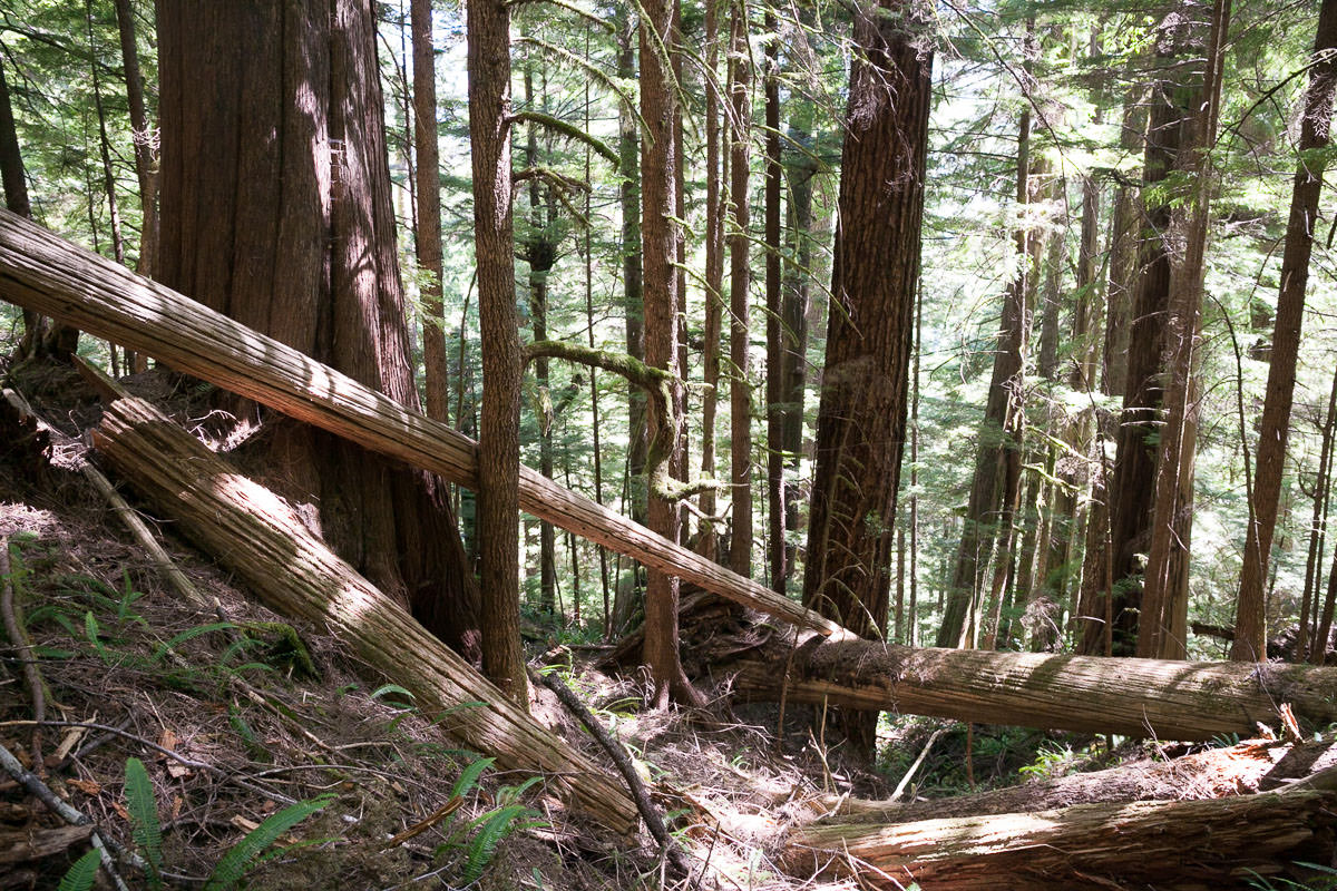 central-walbran-ancient-forest-236.jpg