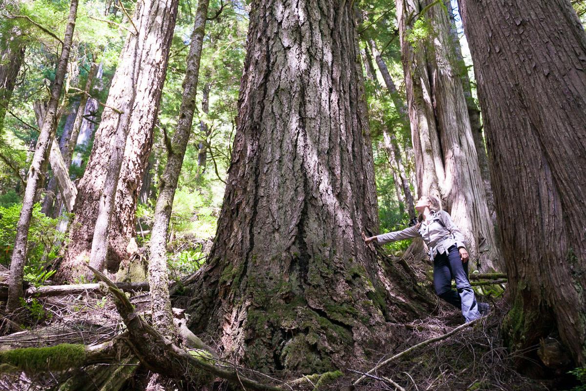 central-walbran-ancient-forest-237.jpg