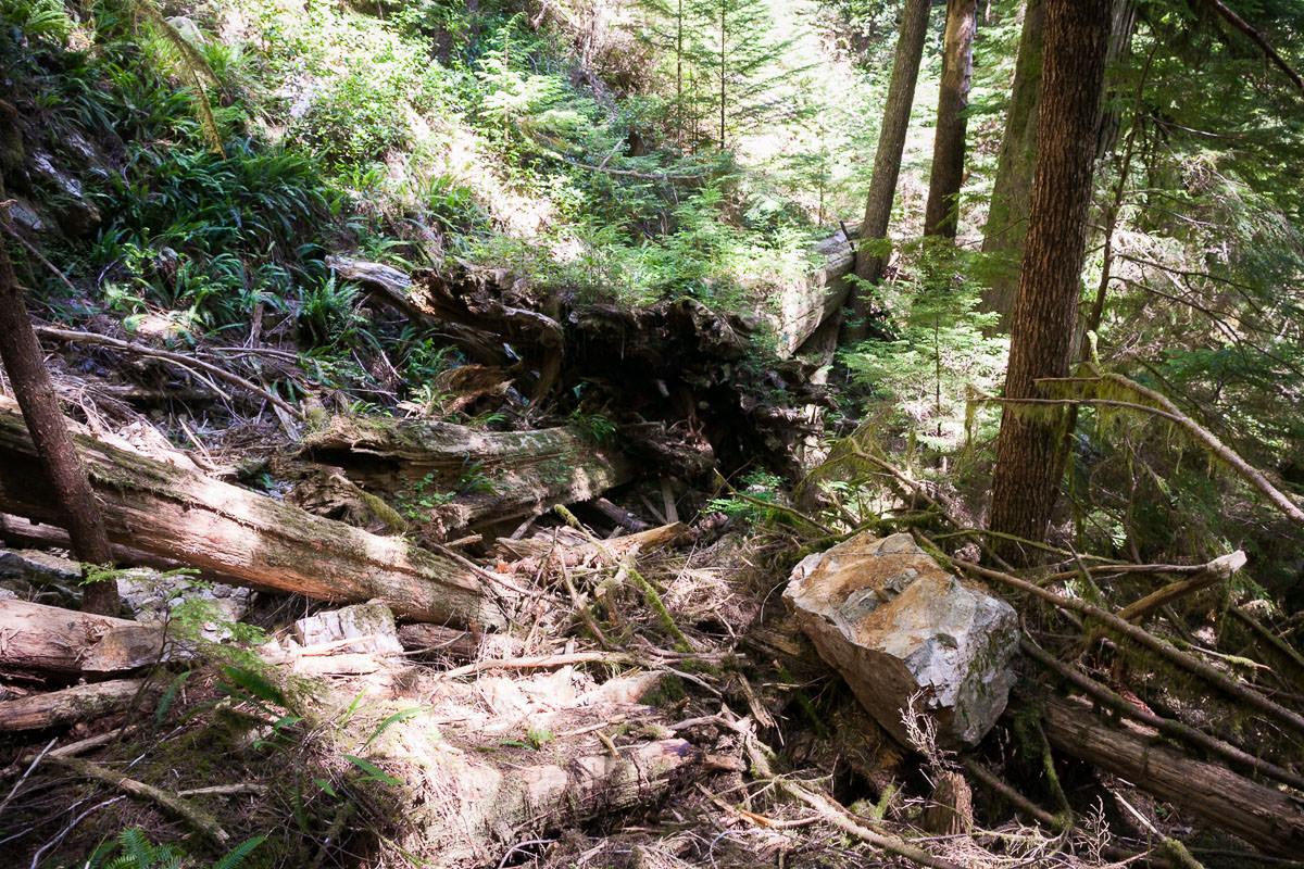 central-walbran-ancient-forest-241.jpg