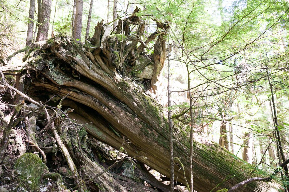 central-walbran-ancient-forest-246.jpg