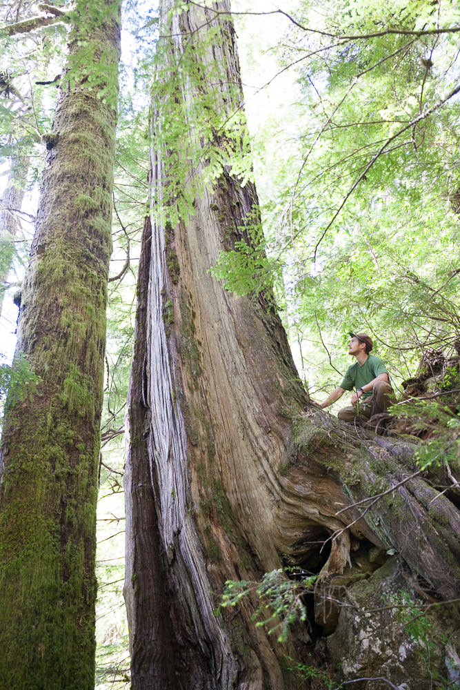 central-walbran-ancient-forest-256.jpg