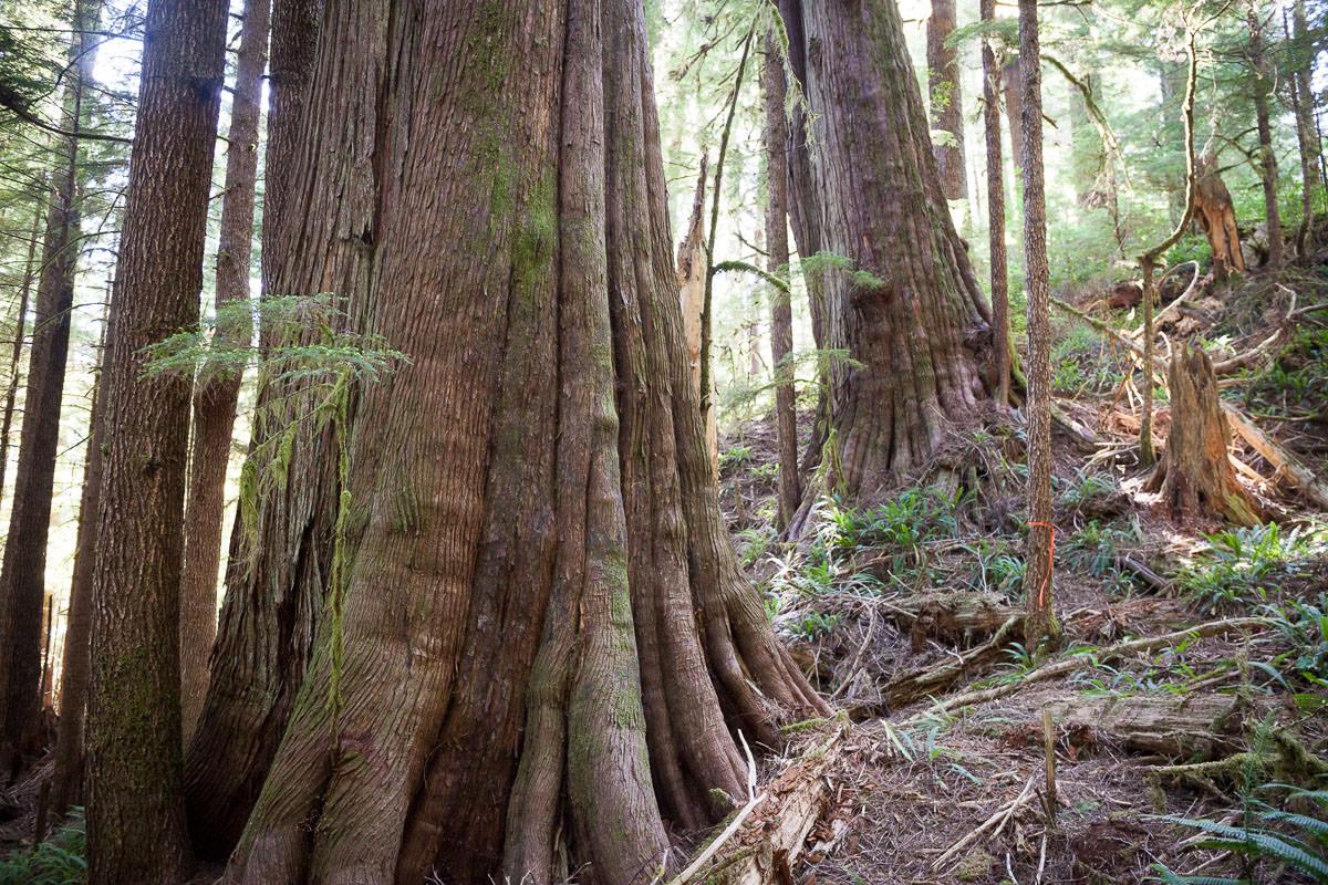 central-walbran-ancient-forest-267.jpg