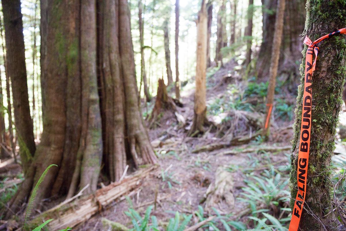 central-walbran-ancient-forest-283.jpg