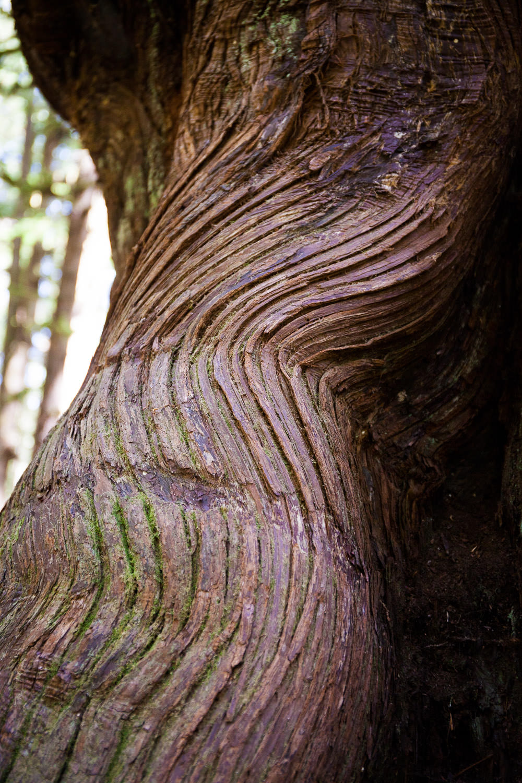 avatar-grove-cedar-back-pattern.jpg